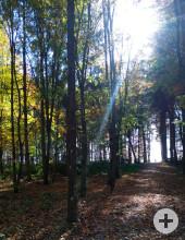 Herbststimmung im Ruhewald