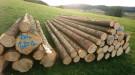 Forst Holzlager