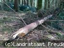 Kontrolle der Waldbestände