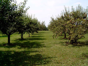 Obstbaumpflegegemeinschaft Isenburg e.V.