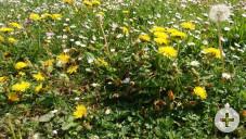 Frühling7