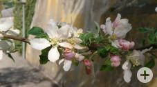 Frühling5