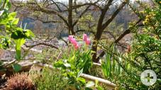 Frühling3