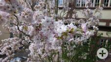 Frühling8